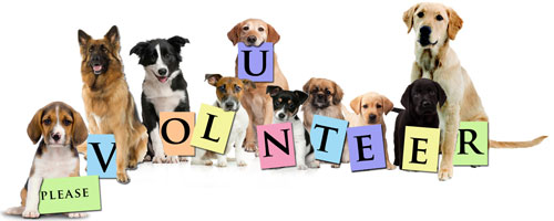 Voluntter Please!